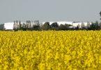 Raps Biodiesel Treibstoff