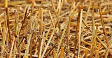 Biomasse wird Biokraftstoff – ohne Konkurrenz zur Lebensmittelproduktion